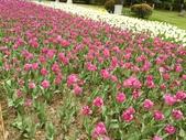 2018-04-16 南京綠博園(鬱金香花季):IMG_20180411_125632.jpg