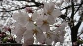 2017-03-19 雞鳴寺及南京林業大學櫻花:DSC_0053.JPG