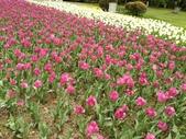 2018-04-16 南京綠博園(鬱金香花季):IMG_20180411_125638.jpg