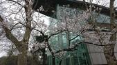 2017-03-19 雞鳴寺及南京林業大學櫻花:DSC_0046.JPG