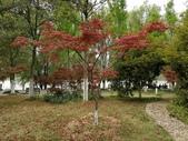 2018-04-16 南京綠博園(鬱金香花季):IMG_20180411_124640.jpg