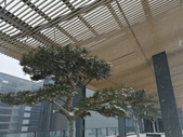 2018-01-25 到底是鵲橋還是雀巢呀?是空橋╮(▔▽▔)╭:IMG_20180125_161833.jpg
