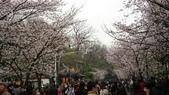 2017-03-19 雞鳴寺及南京林業大學櫻花:DSC_0055.JPG