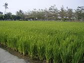 2008屏東熱帶農業博覽會:P3010117.JPG