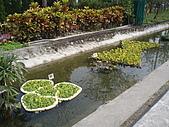 2008屏東熱帶農業博覽會:P3010099.JPG