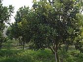2008屏東熱帶農業博覽會:P3010106.JPG