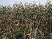 2008屏東熱帶農業博覽會:P3010108.JPG