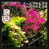 早安/晚安/鈴蘭小語 原創圖片:2018-04-13-09-21-13_1.jpg