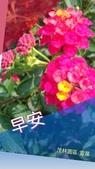 早安/晚安/鈴蘭小語 原創圖片:P_20180416_125750_vHDR_Auto_1.jpg