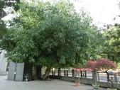 南投 - 中台禪寺:CIMG0941.JPG