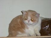 可愛動物:DSCI2882.JPG