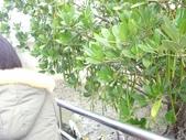 台江國家公園生態之旅:DSCI3249.JPG