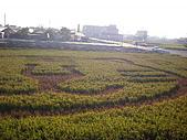 苗栗苑裡:DSCI2294.JPG