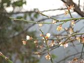 97/01新竹內灣‧城隍廟:內灣站內一隅