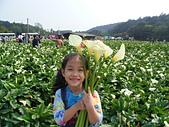 95年‧綜合生活照:竹子湖海芋季