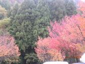 圖:DSCN6619.JPG