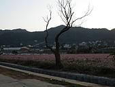 新社花海:PB120057.JPG