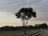 新社花海:PB120059.JPG