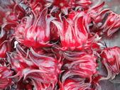 生態:大果粒洛神花(葵)的花萼果實