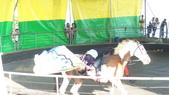 2011-0917--社區2011年自強活動第一天(清境農場):P9170491--清境農場馬術表演.JPG