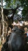2011-0917--社區2011年自強活動第一天(清境農場):P9170381--紫南宮.jpg