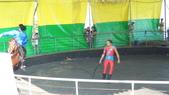 2011-0917--社區2011年自強活動第一天(清境農場):P9170492--清境農場馬術表演.JPG