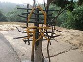 2010-0515--屏東「單車國道」行:P5150362.JPG