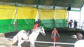 2011-0917--社區2011年自強活動第一天(清境農場):P9170494--清境農場馬術表演.JPG