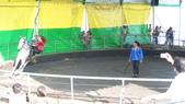 2011-0917--社區2011年自強活動第一天(清境農場):P9170496--清境農場馬術表演.JPG