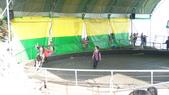 2011-0917--社區2011年自強活動第一天(清境農場):P9170498--清境農場馬術表演.JPG