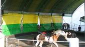 2011-0917--社區2011年自強活動第一天(清境農場):P9170499--清境農場馬術表演.JPG