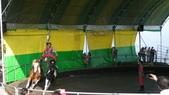 2011-0917--社區2011年自強活動第一天(清境農場):P9170501--清境農場馬術表演.JPG