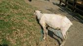 2011-0917--社區2011年自強活動第一天(清境農場):P9170481--清境農場.JPG