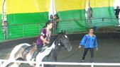 2011-0917--社區2011年自強活動第一天(清境農場):P9170484--清境農場馬術表演.JPG