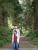 2009/5/1 日本東京自由行:箱根-杉木林蔭道