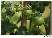菜園隨拍:DSC011030503.jpg