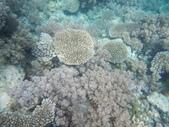 2012帛琉珊瑚海5日Day2-2 浮潛點之二:DSCN0941.JPG