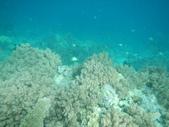 2012帛琉珊瑚海5日Day2-2 浮潛點之二:DSCN0943.JPG