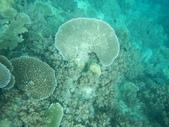2012帛琉珊瑚海5日Day2-2 浮潛點之二:DSCN0944.JPG