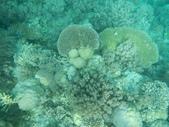 2012帛琉珊瑚海5日Day2-2 浮潛點之二:DSCN0945.JPG