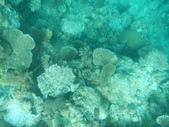 2012帛琉珊瑚海5日Day2-2 浮潛點之二:DSCN0947.JPG