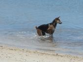 2012帛琉珊瑚海5日Day2-3 紅樹林獨木舟&午餐:DSCN1004.JPG