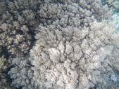 2012帛琉珊瑚海5日Day2-2 浮潛點之二:DSCN0940.JPG