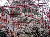 遊山玩水-阿里山篇:P1010148.JPG