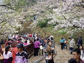 遊山玩水-阿里山篇:P1010149.JPG
