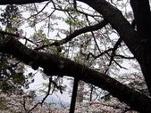 遊山玩水-阿里山篇:P1010154.JPG