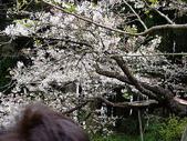 遊山玩水-阿里山篇:P1010135.JPG