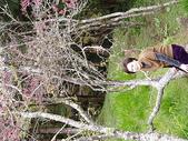 遊山玩水-阿里山篇:P1010140.JPG