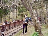 遊山玩水-阿里山篇:P1010146.JPG