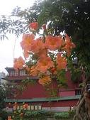 flower:植物園-凌宵06.jpg